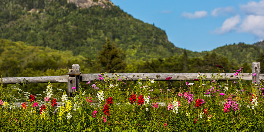 Spring Flowers and Mountain
